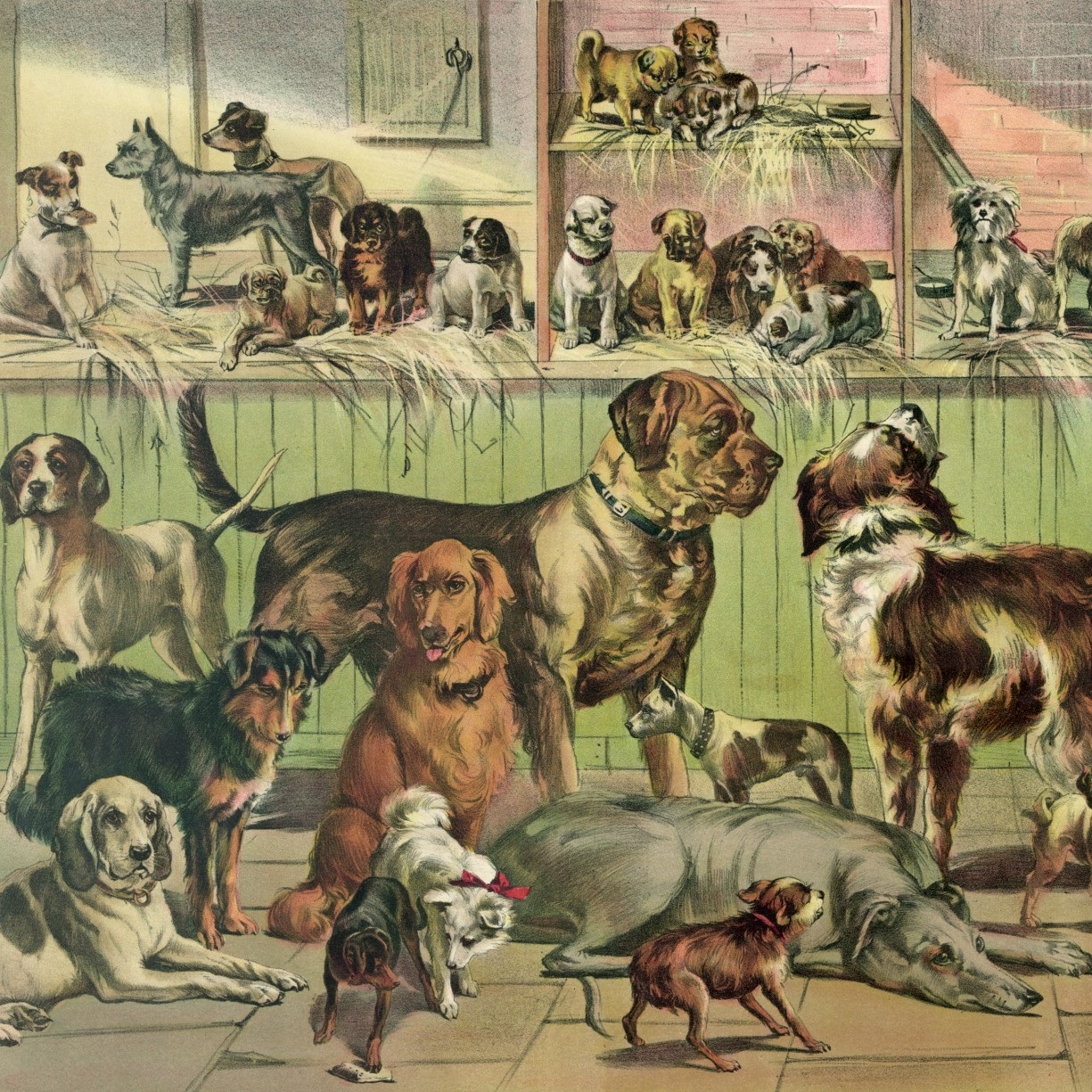 registered veterinary technician