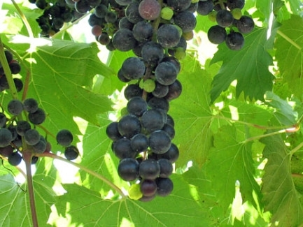 There are many local wineries to visit. Follow the link to  the Door County Wine Trail website.