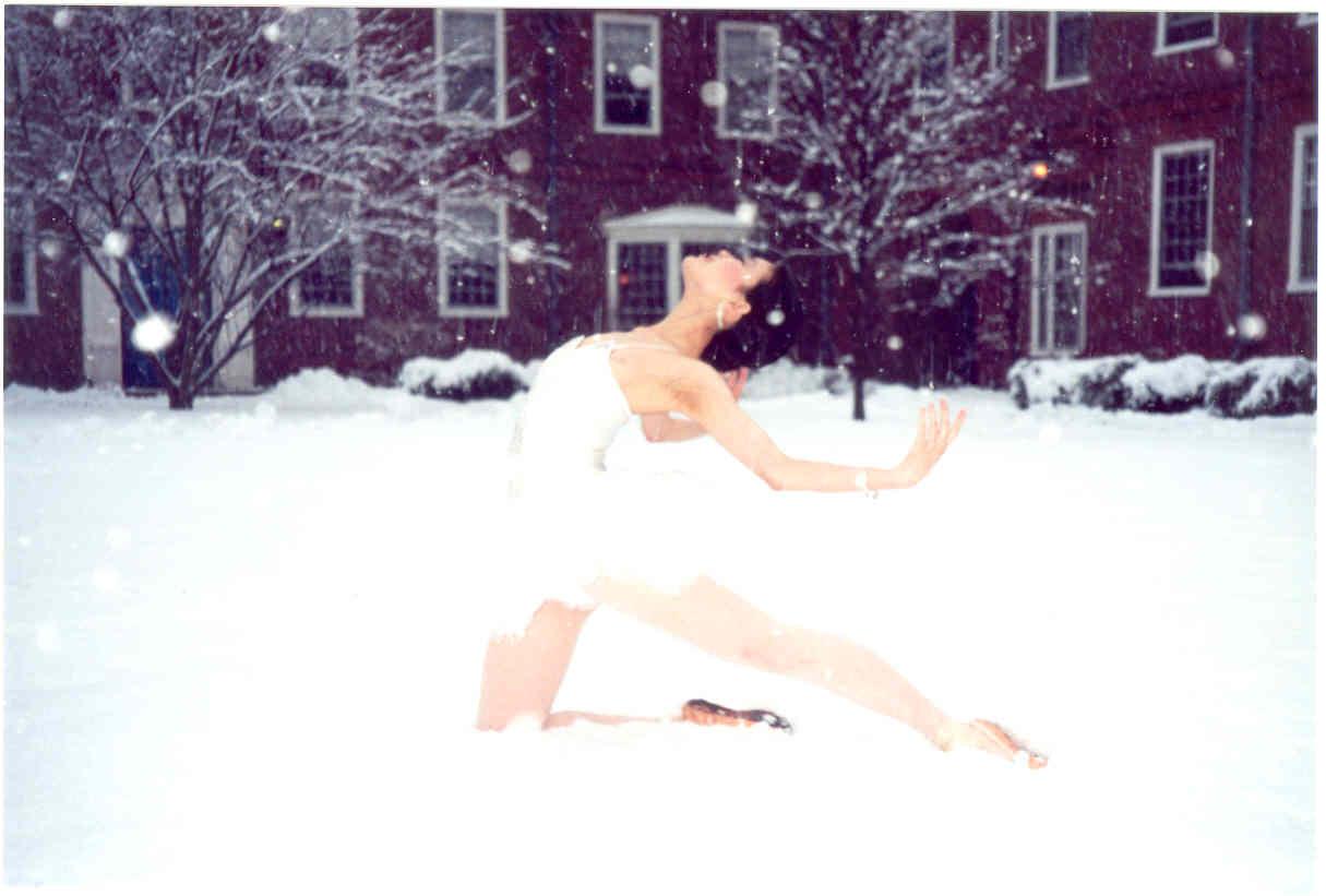 A very cold swan.jpg