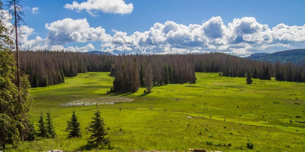 The Wolf Creek landscape. Photographer unknown.