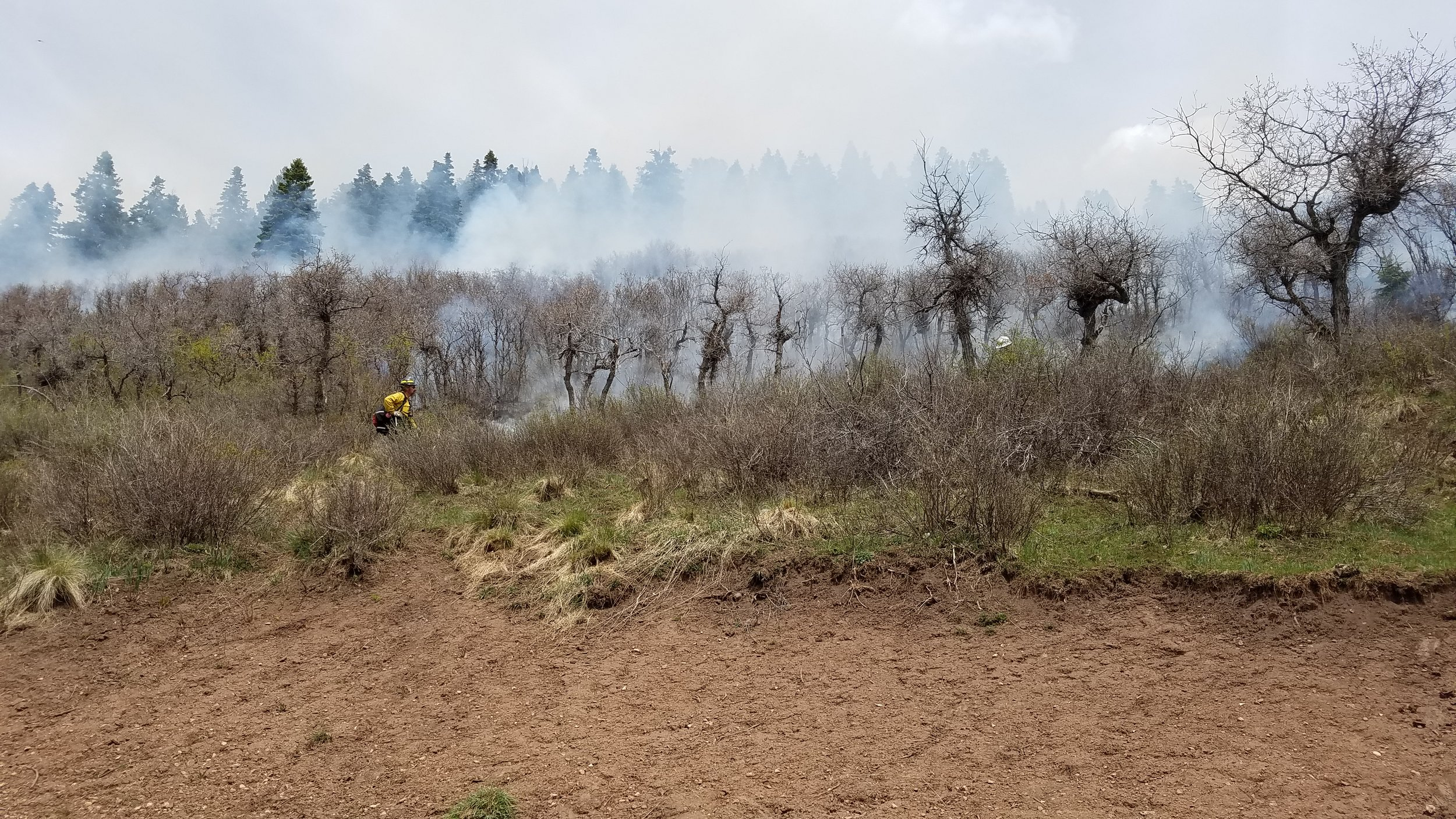 Low intensity prescribed fire for habitat improvement on private land near Chama, NM.