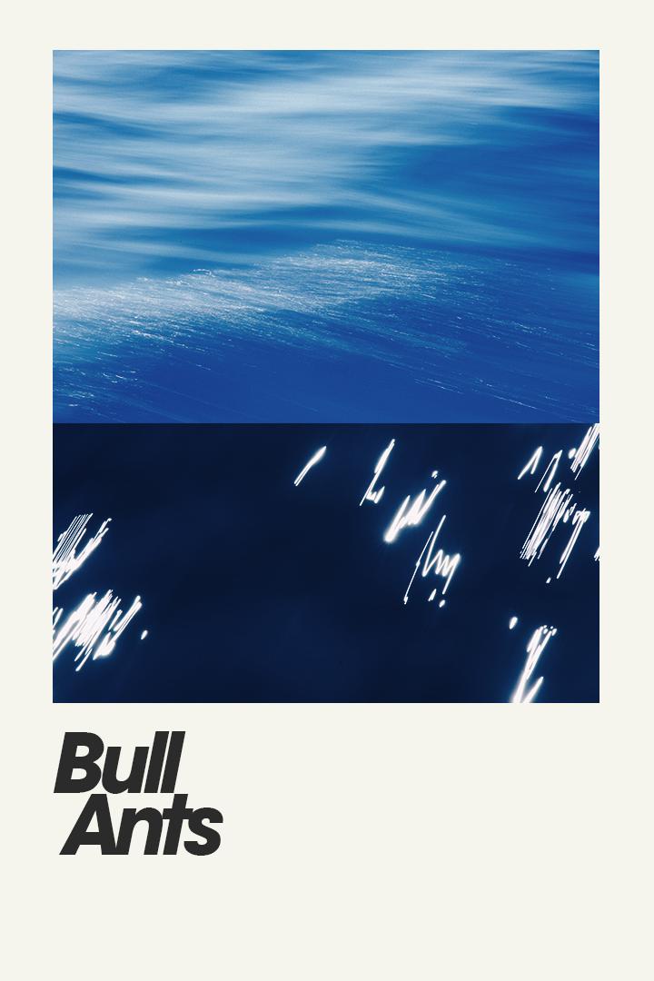Bull Ants Poster v1.jpg