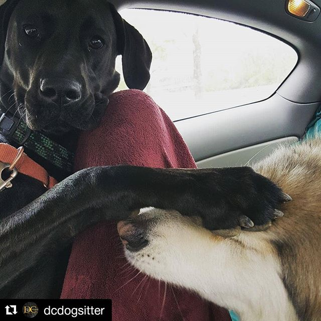 "#Repost @dcdogsitter (@get_repost) ・・・ ""He said I could have his treats..."" . . . . .  #dcdogsitter #dogsofdc #dcdsfamily #elevatethecare #instagramdogs #petstagram #dogs_of_instagram #puppylove #weeklyfluff #ilovemydog #doglovers #dogoftheday #dogsofig #doglover #doglife #instapet #lovepuppies #petsofinstagram #dogslife #puppies #bestwoof #petsagram  #washingtondc #exposeddc #igdc #mydccool #acreativedc #streetmeetdc  #focalmarked"