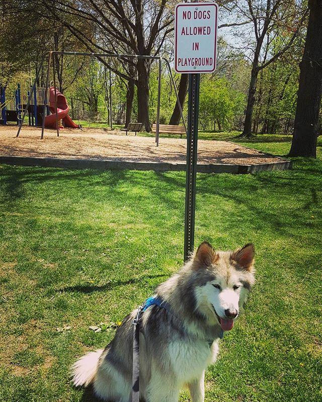 Say what??!! . . . . . #elevatethecare #dcdogsitter #instagramdogs #petstagram #dogs_of_instagram #puppylove #weeklyfluff #ilovemydog #doglovers #dogoftheday #dogsofig #doglover #doglife #instapet #lovepuppies #petsofinstagram #dogslife #puppies #bestwoof #petsagram #dogscorner #pup  #washingtondc #exposeddc #igdc #mydccool #acreativedc #streetmeetdc  #focalmarked