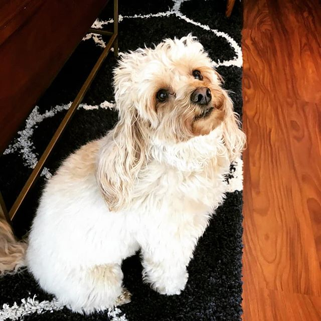 Happy Monday from this little sweetheart! We ❤ Nutella! . . . . . #elevatethecare #dcdogsitter #instagramdogs #petstagram #dogs_of_instagram #puppylove #weeklyfluff #ilovemydog #doglovers #dogoftheday #dogsofig #doglover #doglife #instapet #lovepuppies #petsofinstagram #dogslife #puppies #bestwoof #petsagram #dogscorner #pup #barkbox #puppiesofinstagram #dog_features  #focalmarked