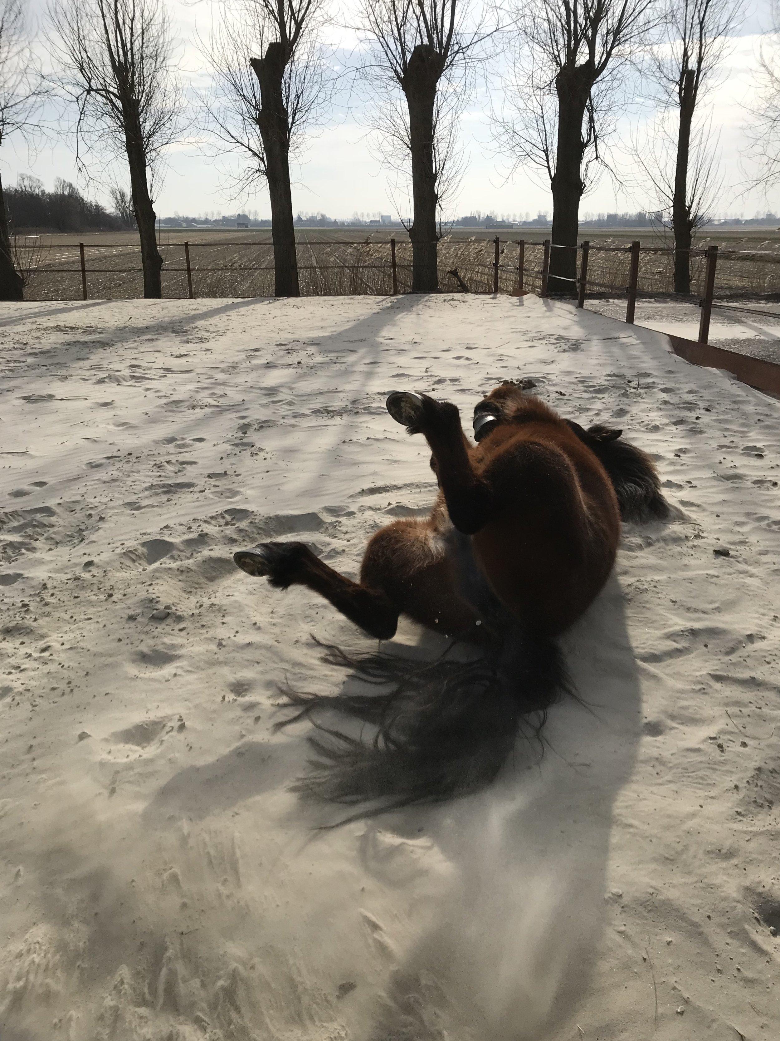 jouw lichaamstaal - Paarden zijn constant alert op signalen en observeren hun omgeving nauwkeurig. Ze nemen zowel bewust als onbewust gedrag waar.Zo reageren ze bijvoorbeeld op angst, enthousiasme, spanning of verdriet. Als jouw gedrag niet overeenkomt met wat je voelt en denkt zal een paard dit als verwarrend ervaren en hierop reageren.Het zijn deze kwaliteiten die een coachsessie met paarden zo waardevol maakt.