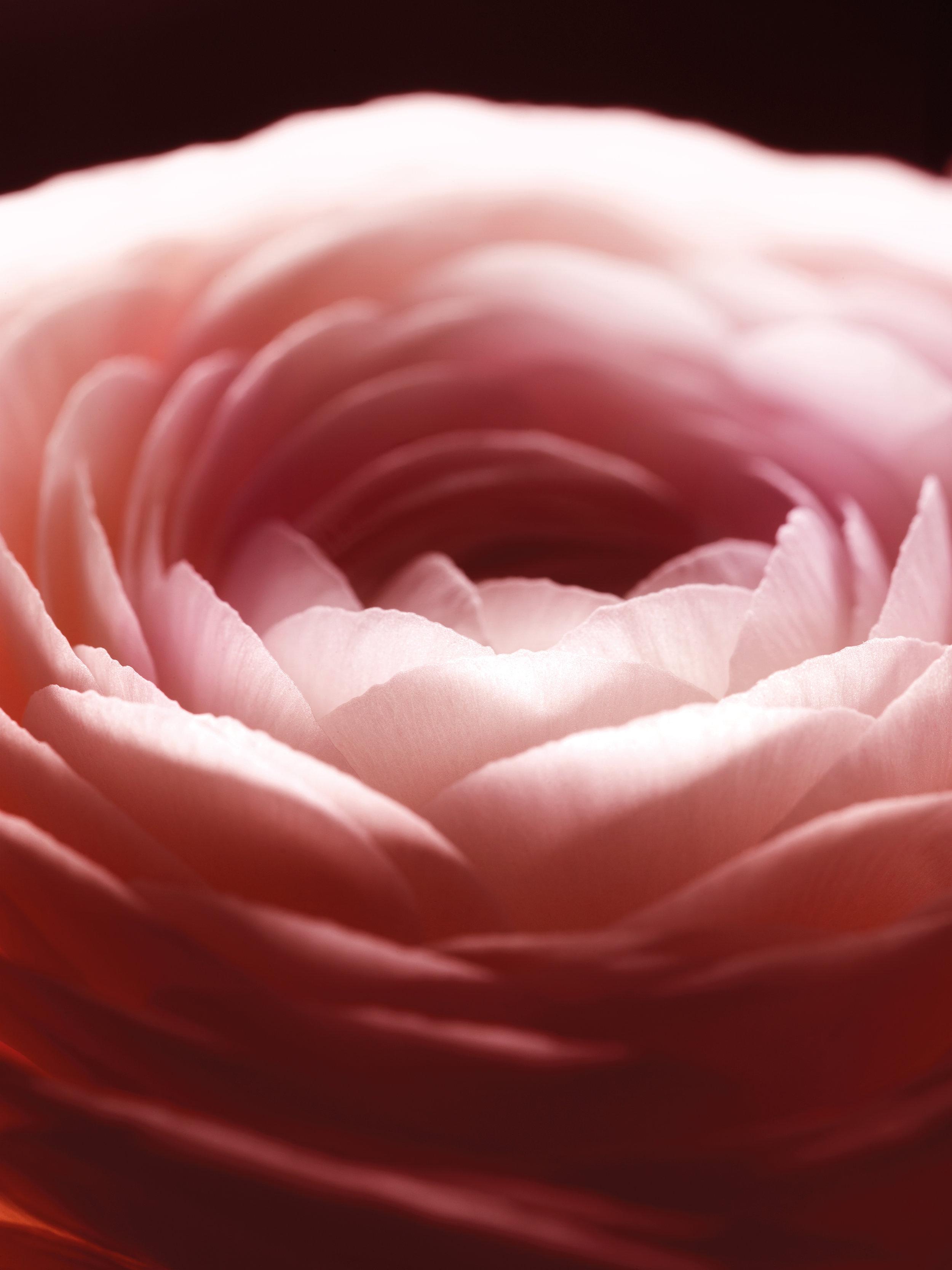 Róża -