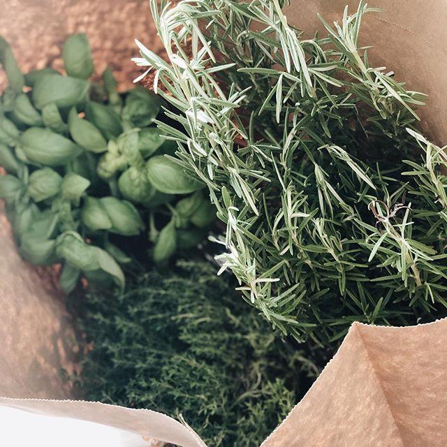 Lo #shopping che preferisco 🌿🌿🌿 #herbs #erbearomatiche