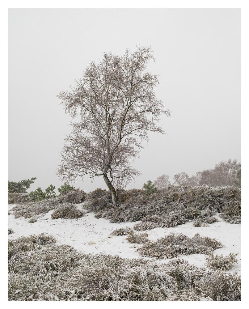 20171210--Winter-Kalmthout_-8-bewerkt.jpg