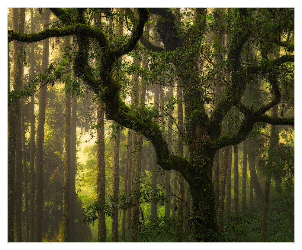Alishan forest, Taiwan