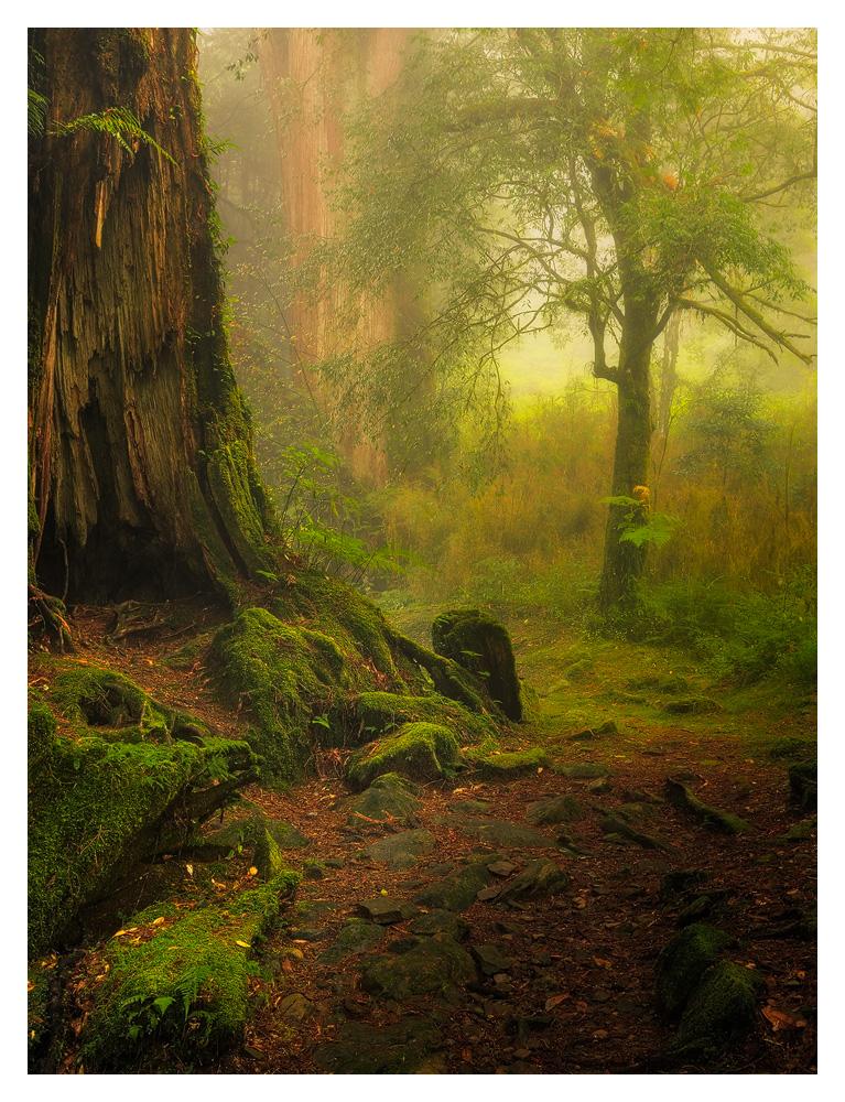 """Alishan """"fairytale"""" forest"""