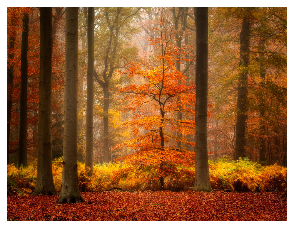 Autumn in Liesbos