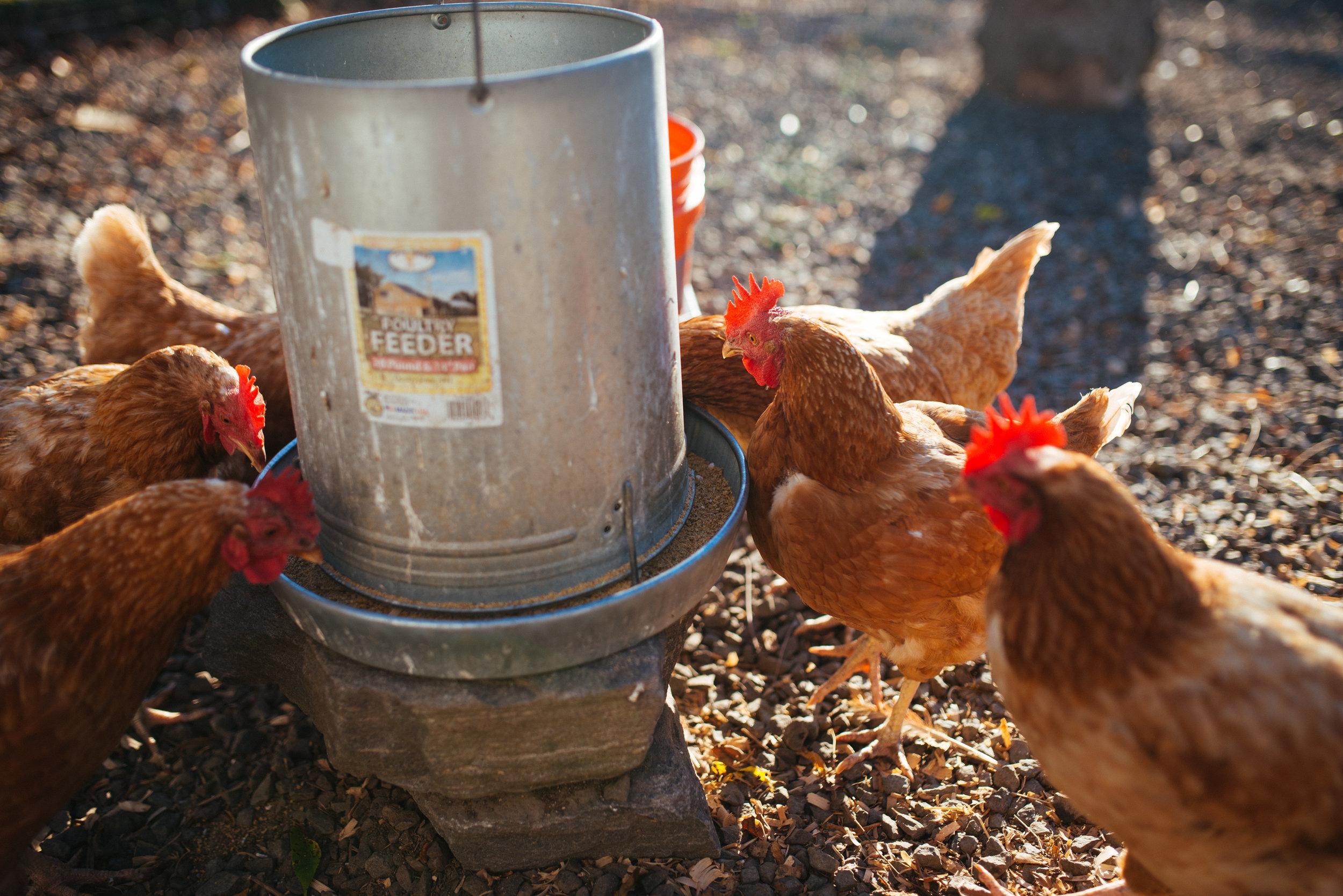 Off Center Farm-0503.jpg