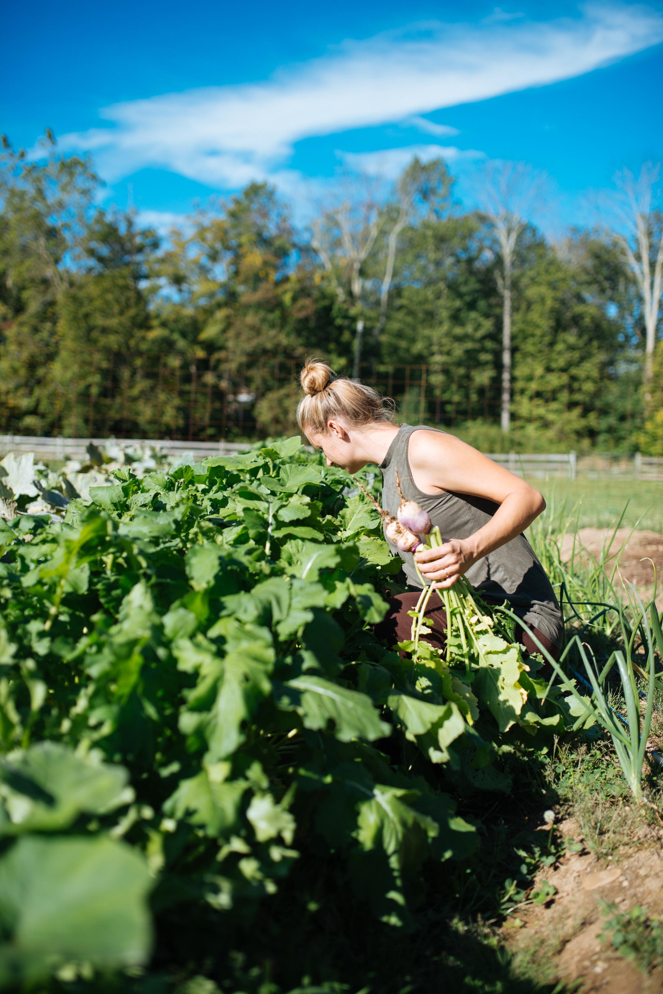 Off Center Farm-0377.jpg