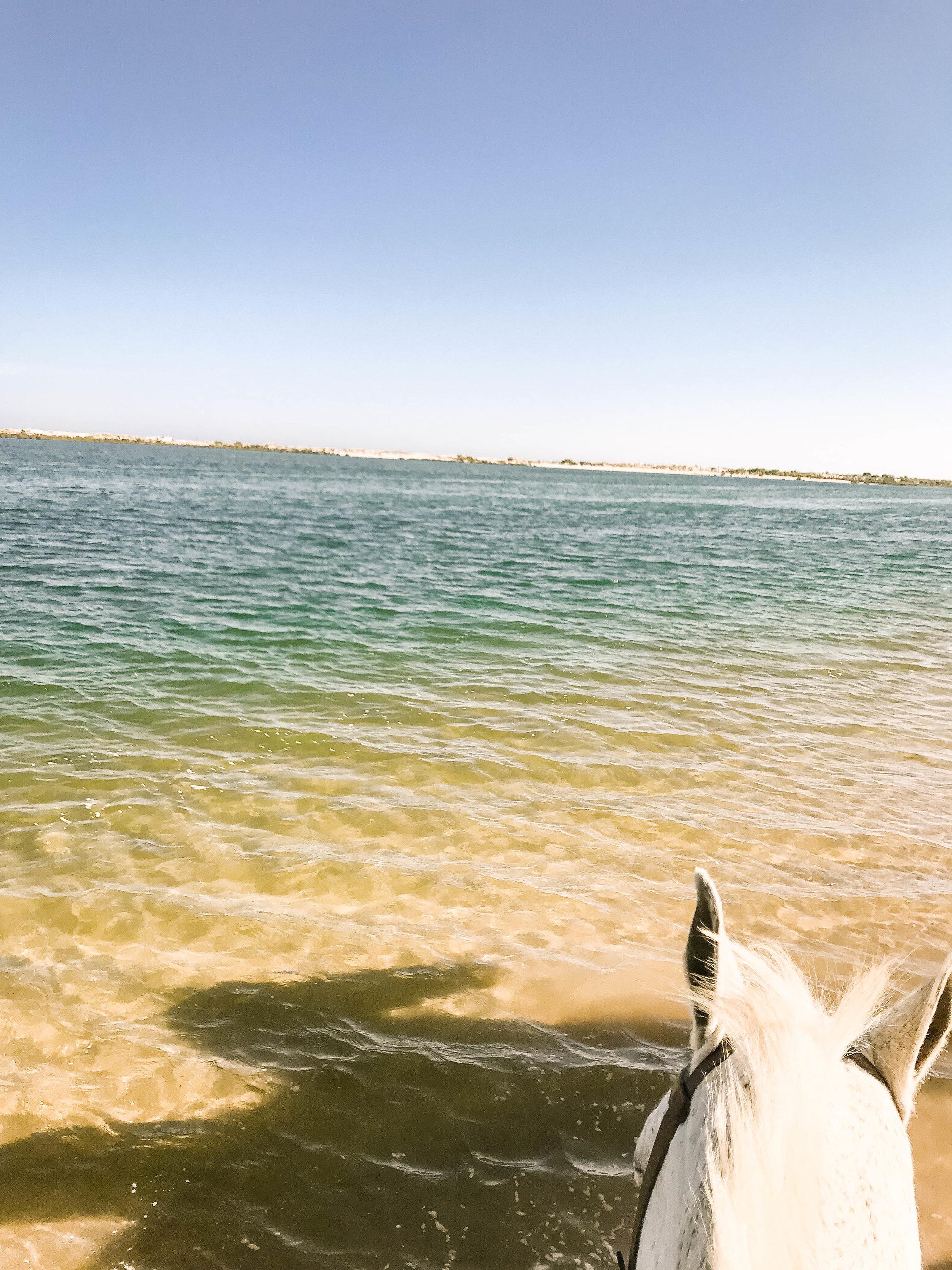 Horseback riding on the coast - ride through the water, orange trees, and vineyards