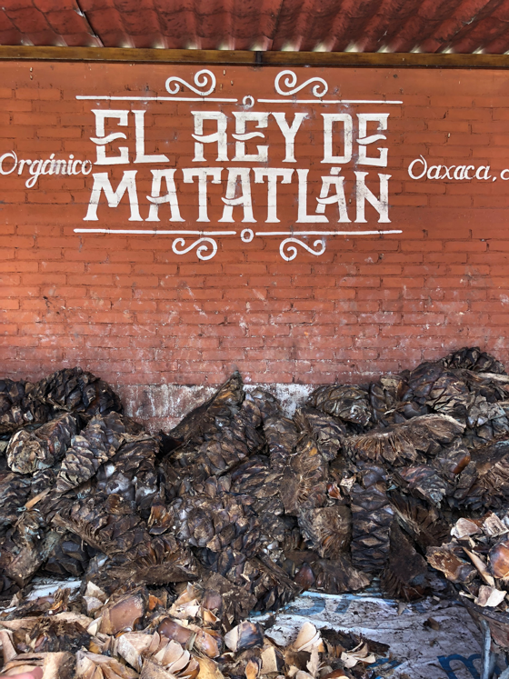The mezcal liquor in its early stages as chopped up agave root.
