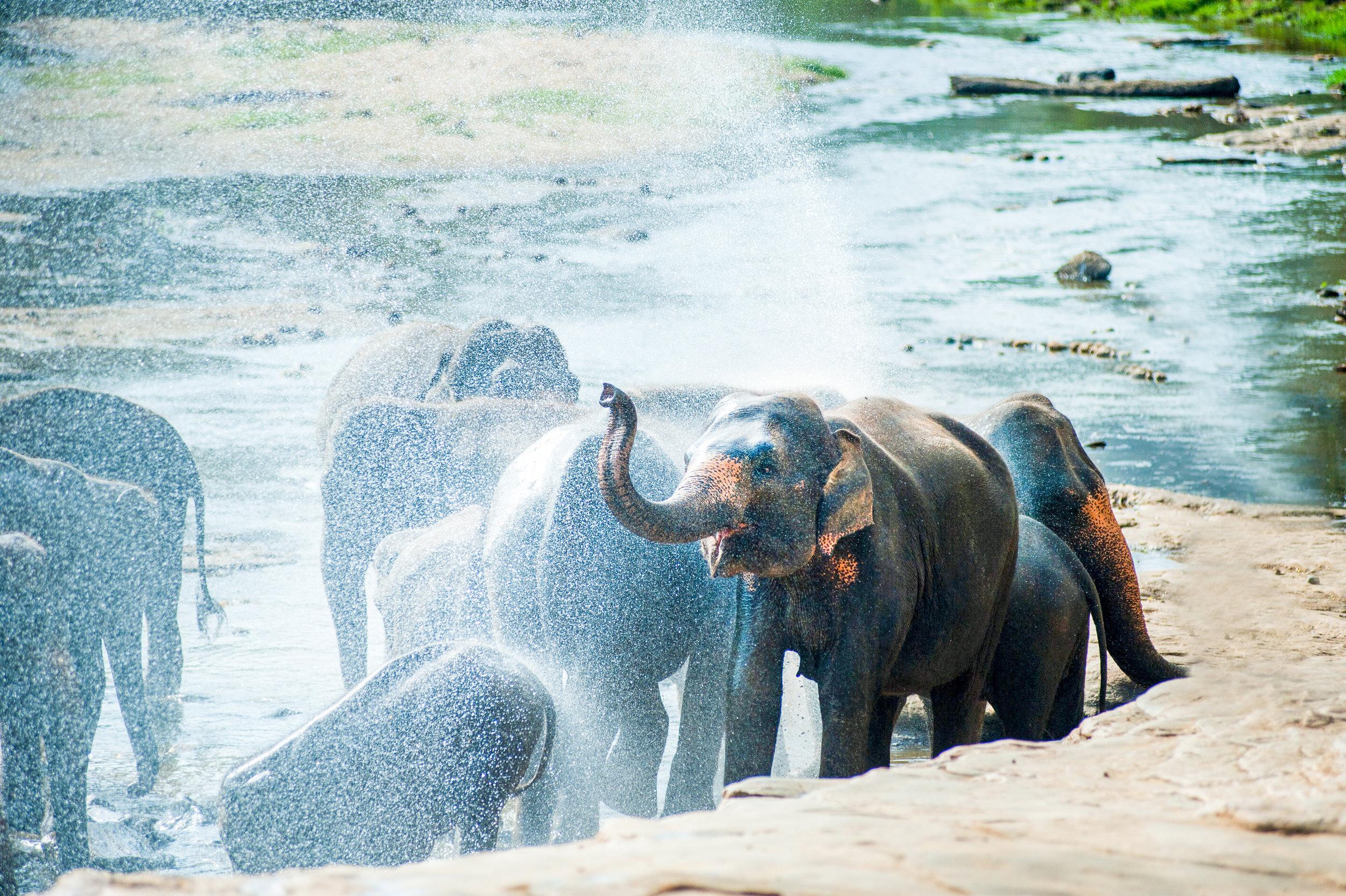 4-ElephantJungleSanctuary Chiang Mai.jpg