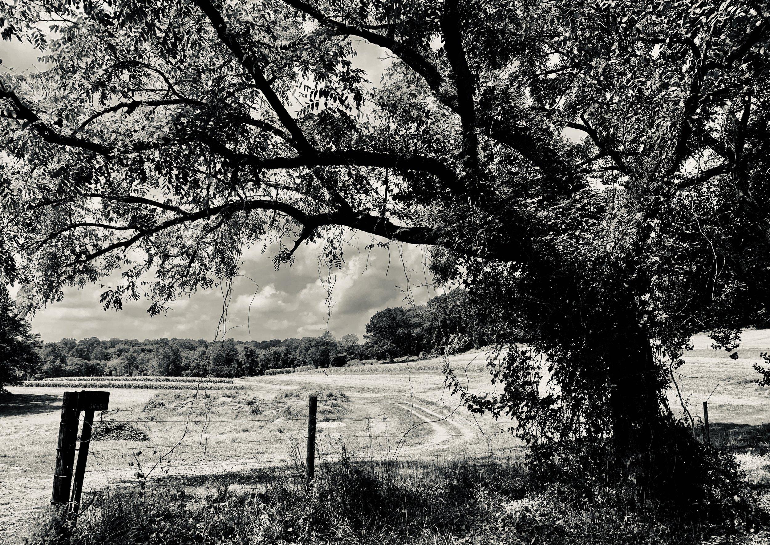 treesiw.jpg