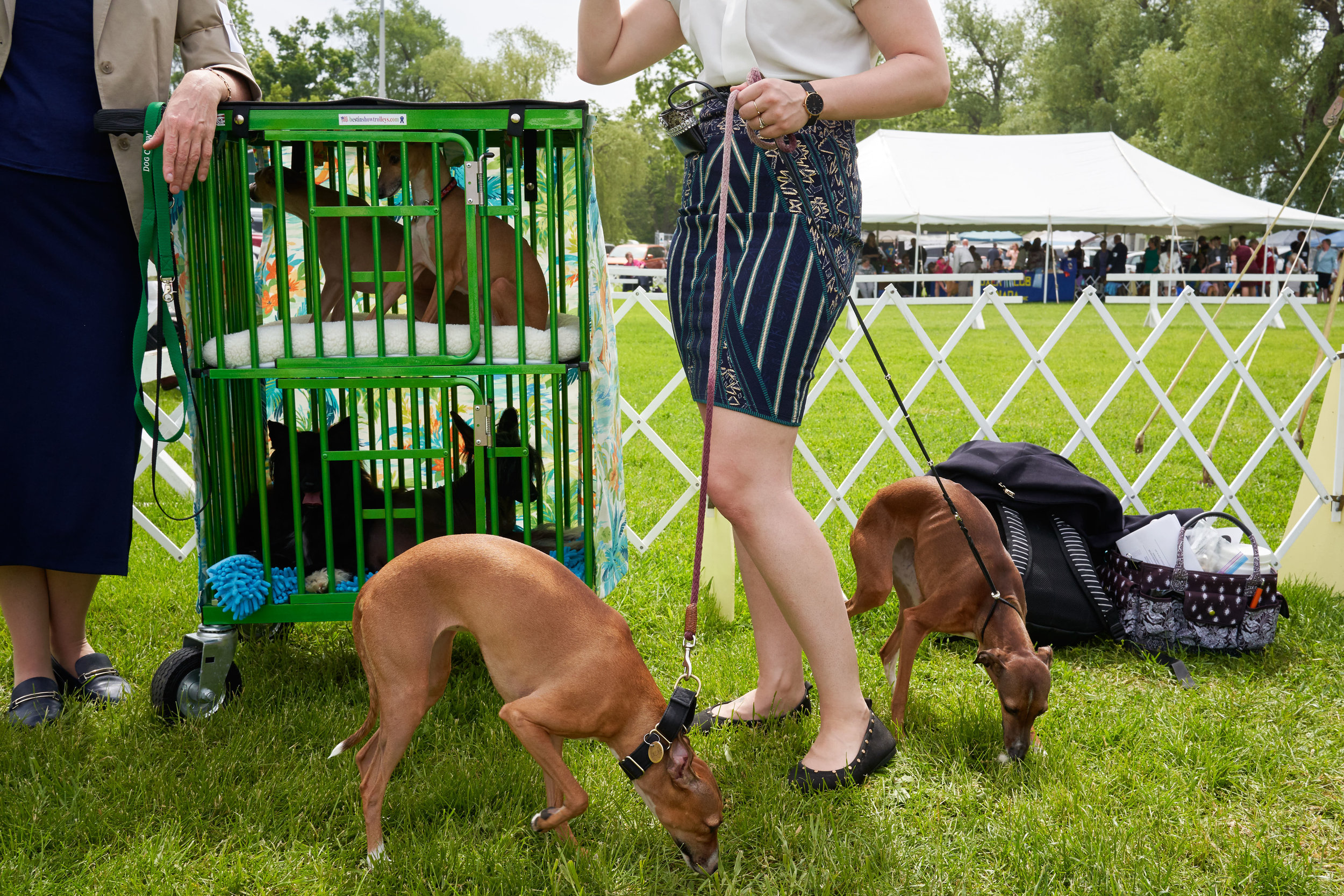 Italian greyhound owners talk before the show