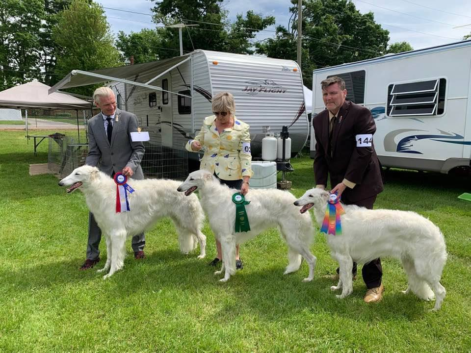 AmCh, CnGCh MSBPIS Freckashpeng Vaughn Rurik NS - Best of Breed GCh SBIS, BPIS Freckashpeng Kniaz Viktor NS - Award Of Merit  GCh Freckashpeng Kira Rurik NS - Select Bitch