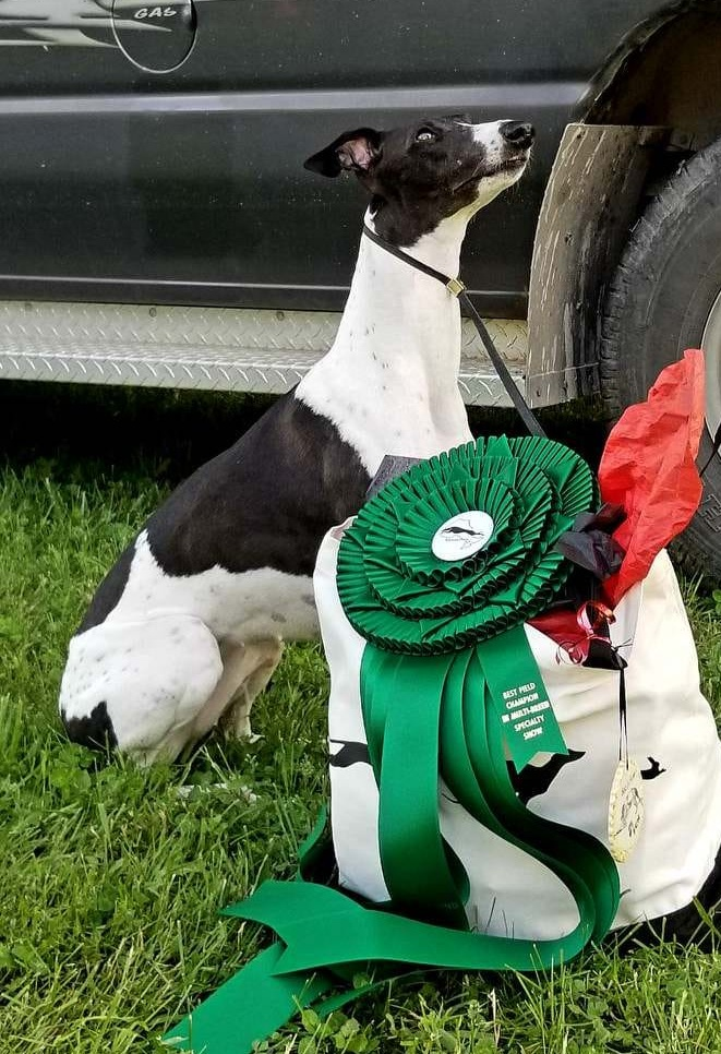 Yaya poses with her ribbon and fabulous trophy by Debbie Daley photo courtesy of H-j Dansereau