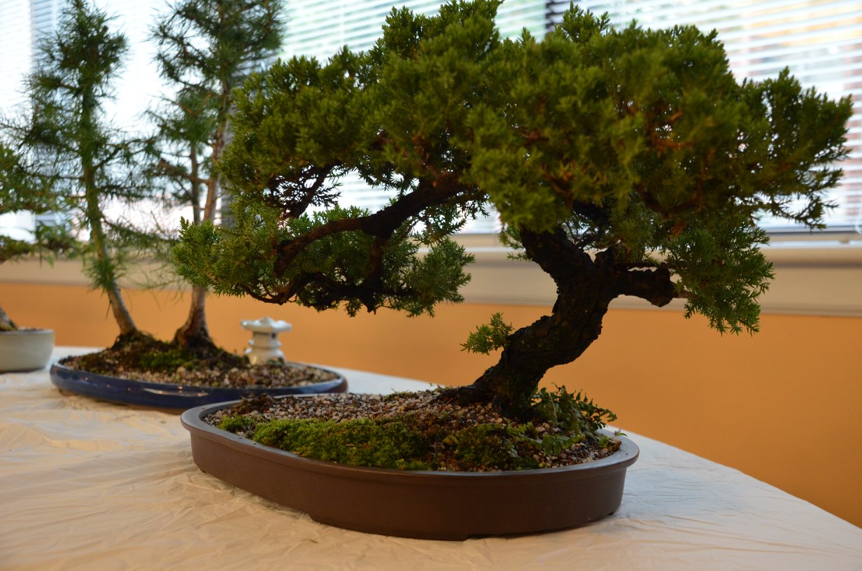 Richmond Bonsai Society