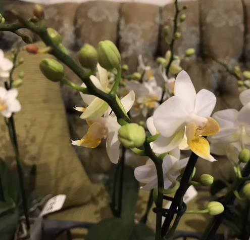 Chadwick & Son Orchids