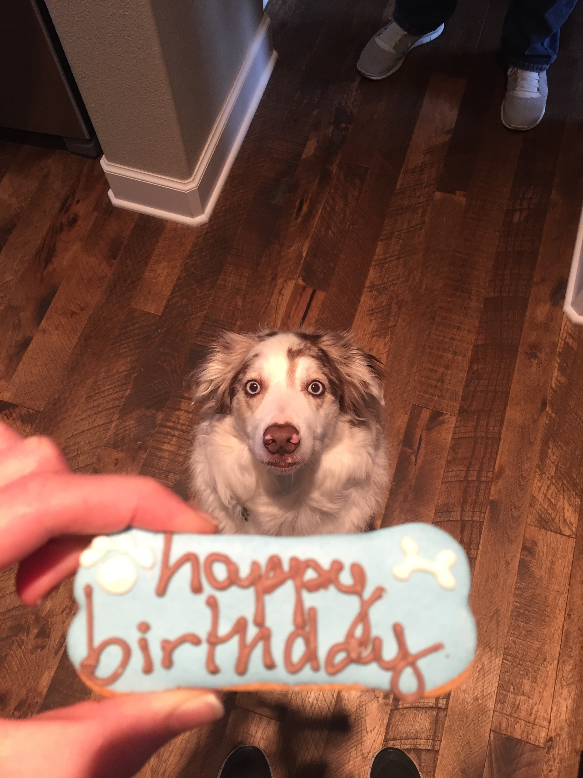 Fenway celebrated a birthday too!