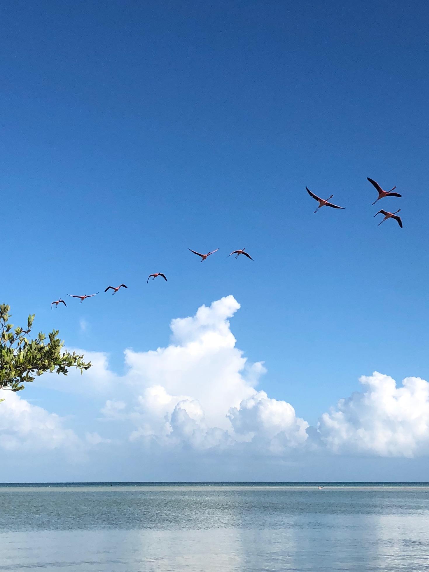 Holbox Flamingos 8.jpg