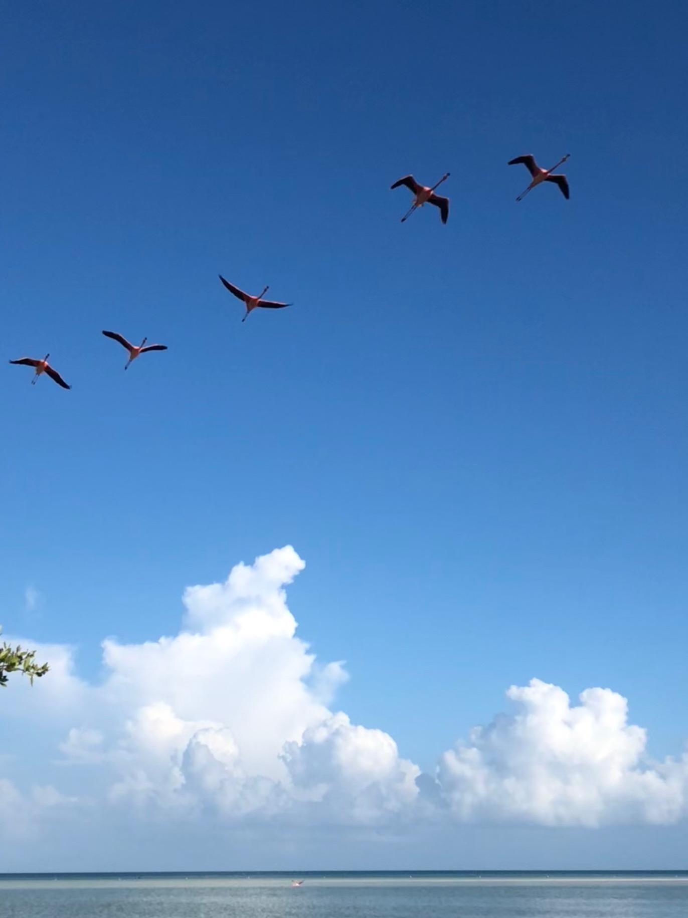 Holbox Flamingos 10.jpg