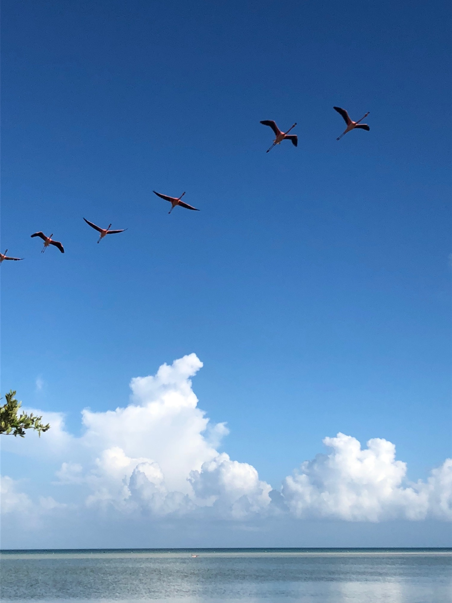 Holbox Flamingos 9.jpg