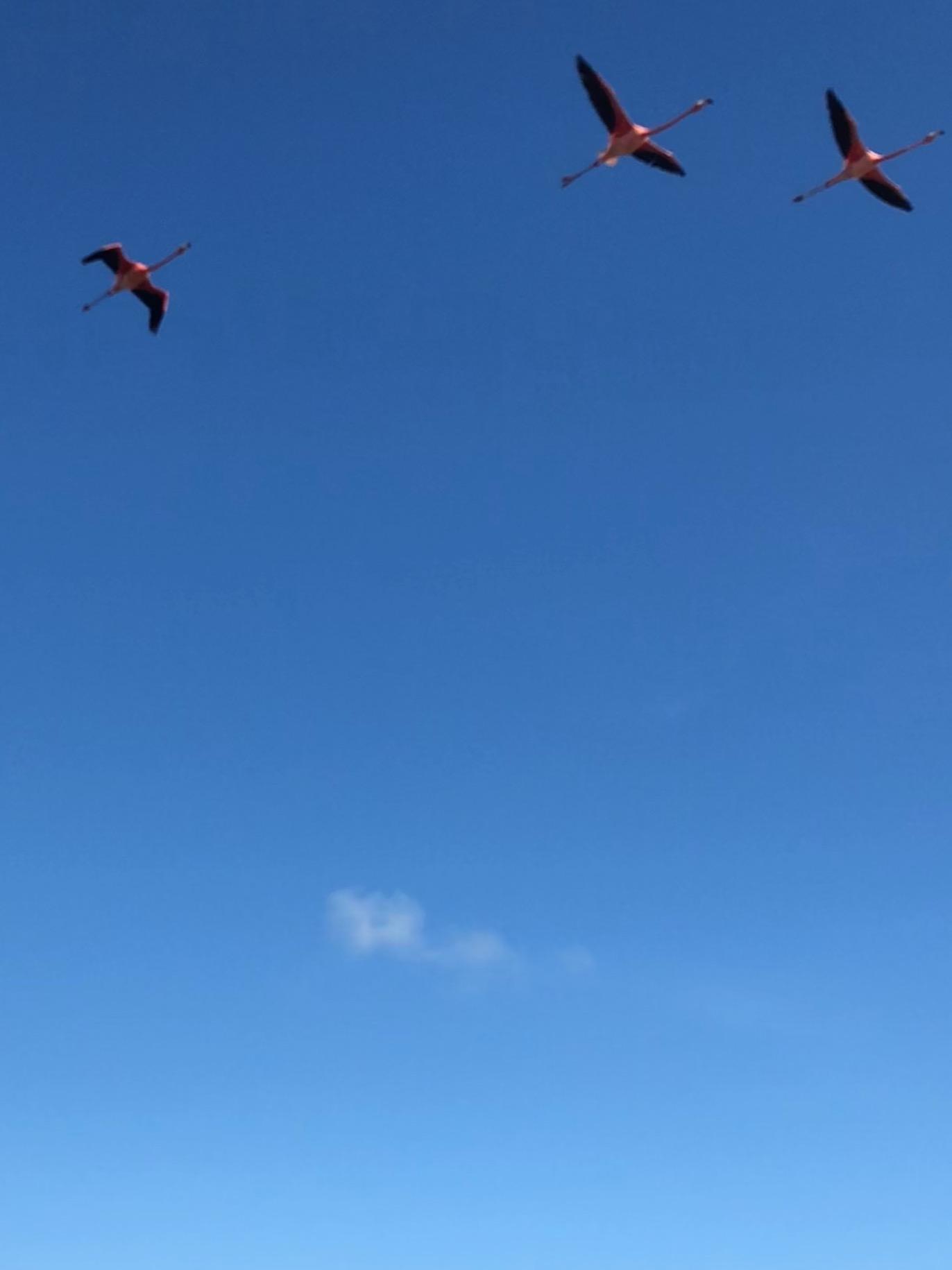 Holbox Flamingos 11.jpg