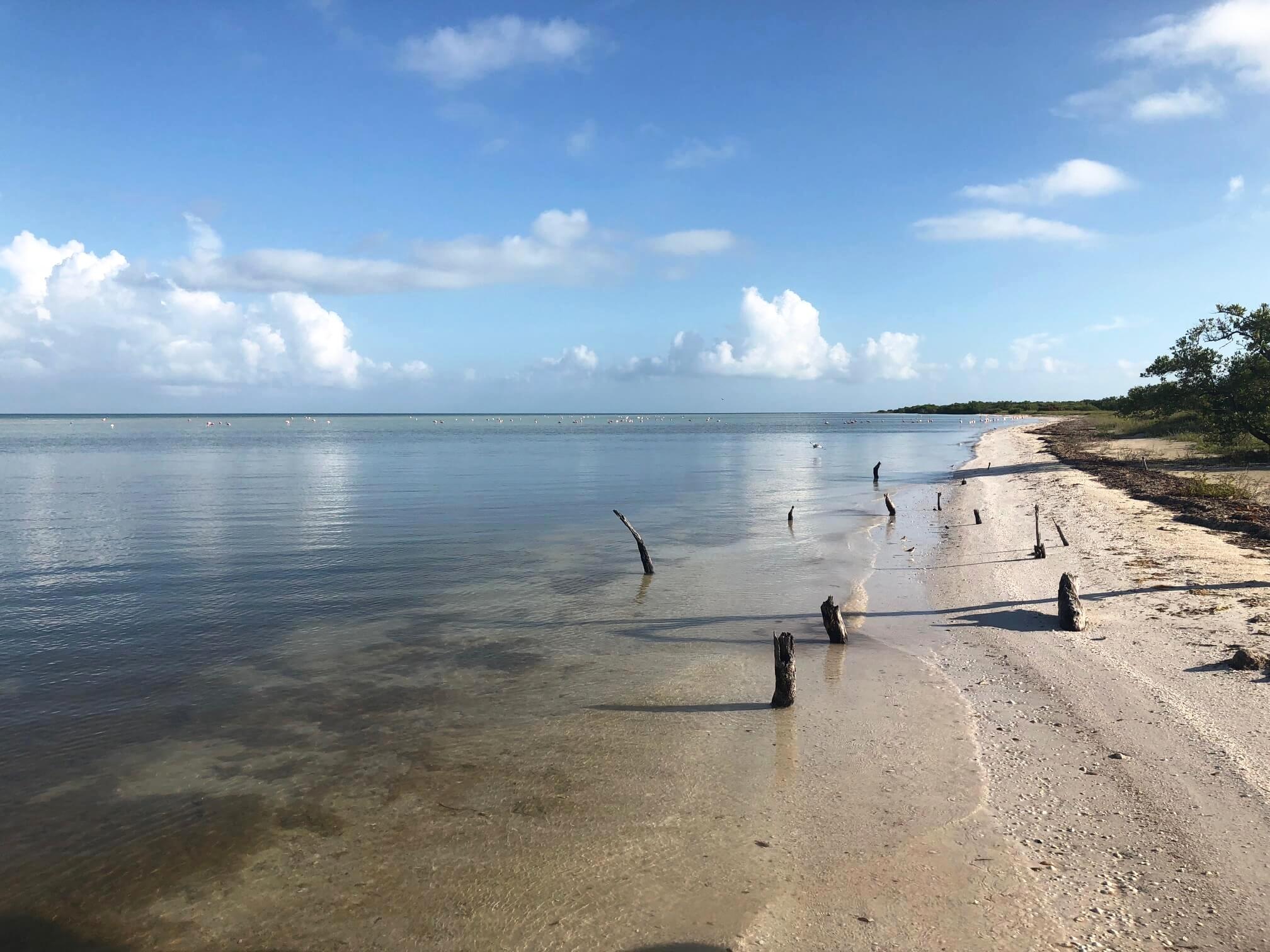 Holbox beach Flamingos.jpg