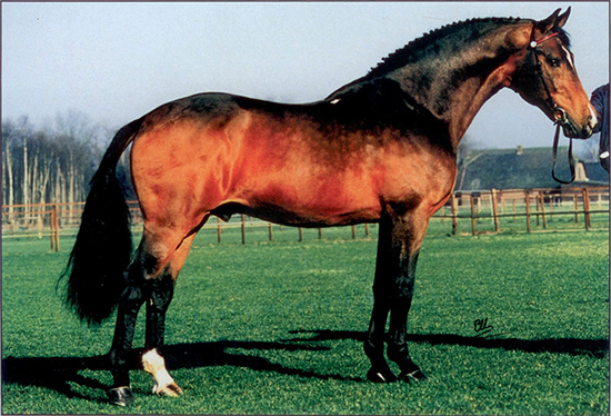 Nimmerdor, photo credit Horse Magazine
