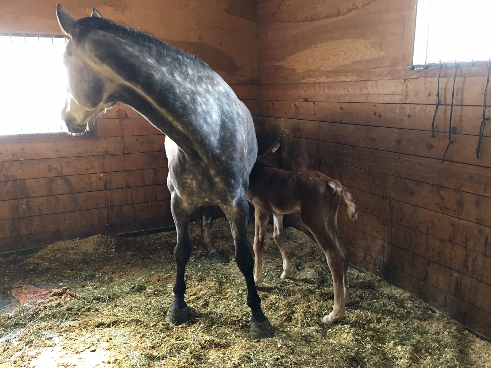 Gazelle's first day as a first time mom, with 2017 foal Malibu (Phin Phin)