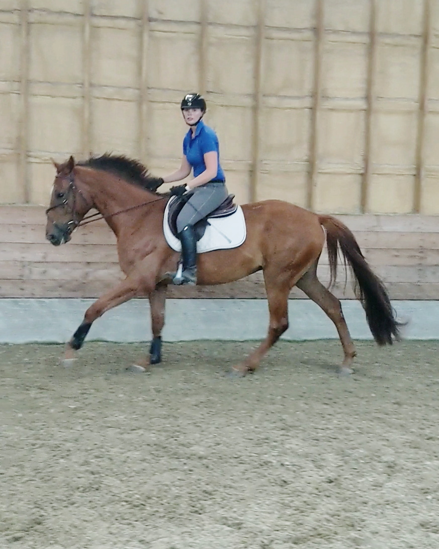 Lewis KVS, the first of our 2016 babies to canter under saddle