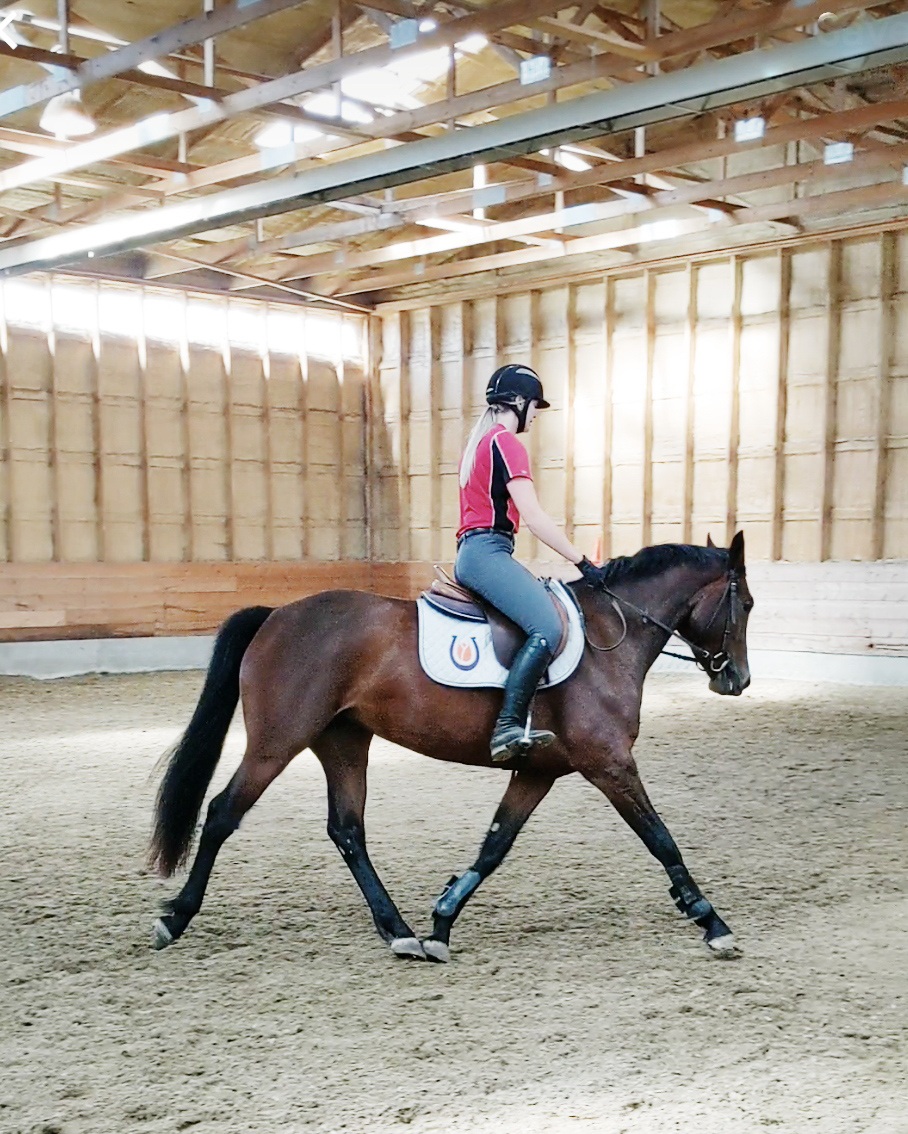 Lordana KVS, first trot/third time under saddle, July 2019