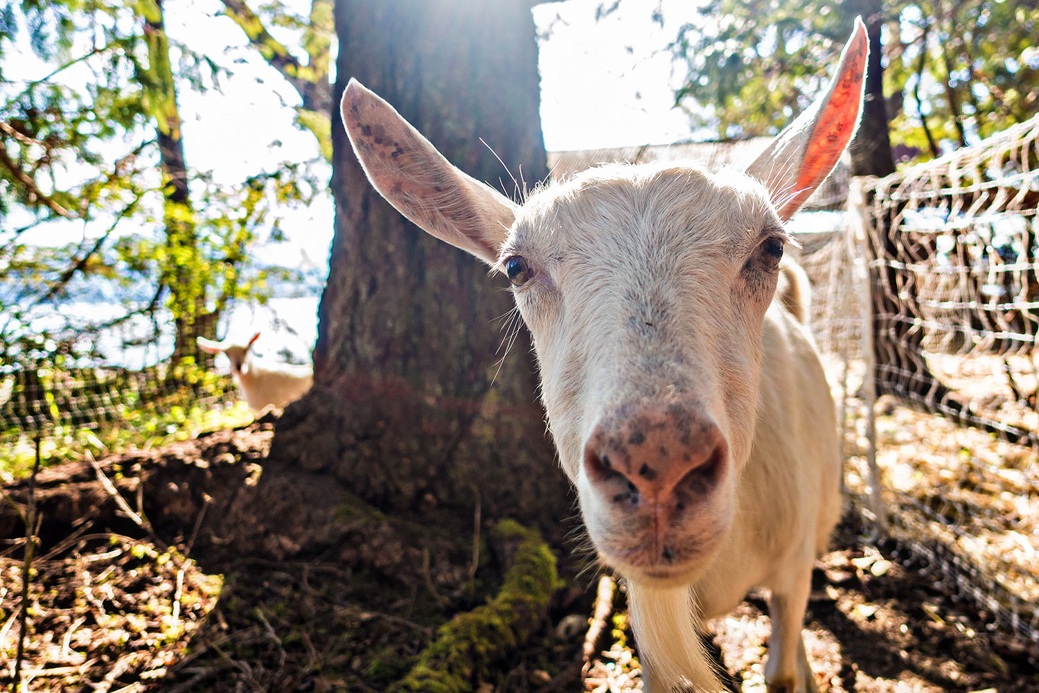 Want to be WWOOFER at Habitat Farm and Jollity Farm on Thetis Island? -
