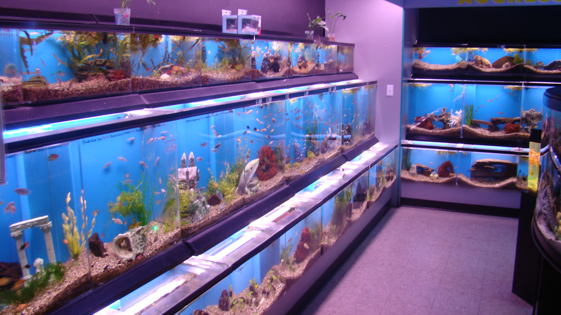 freshwater_fish.JPG