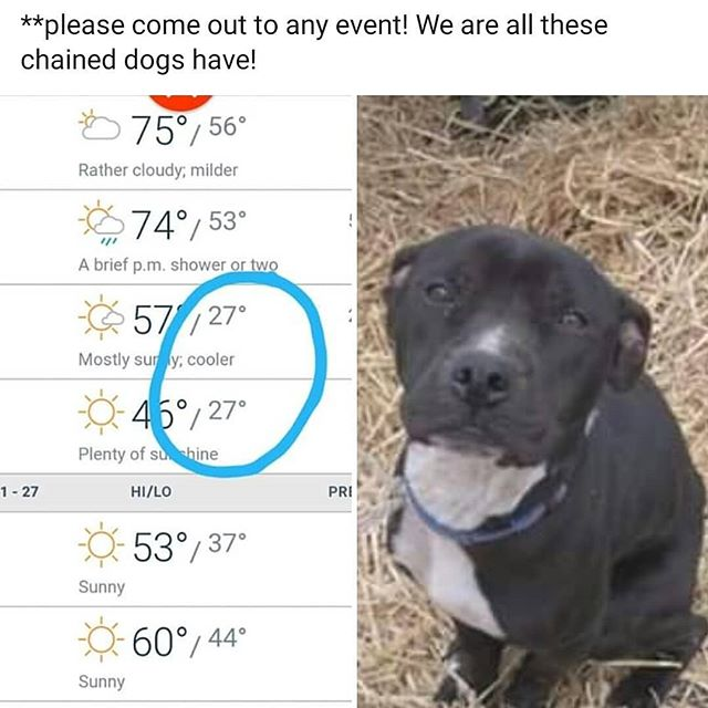 Artic front is coming to Houston! We will be having a hay run and food drive. If you can donate or volunteer with us we truly appreciate it!  #thisishouston #houstonhuts4mutts #hay #dogsonchains #dogrescue #donation #dogfood #donate #instagram  #houston #help