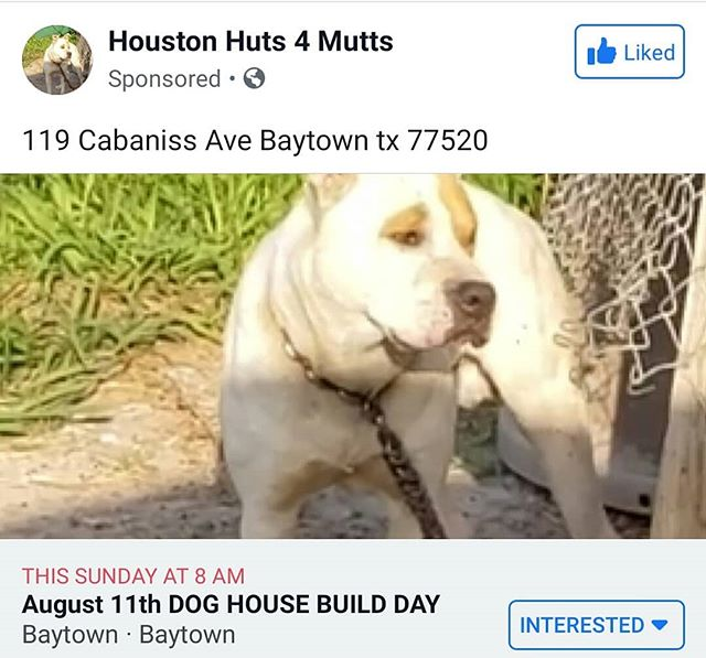 This Sunday! August 11! Come join us for our build day 🏠🐕♥️. If you would like to donate, link in Bio to our PayPal ☺️
