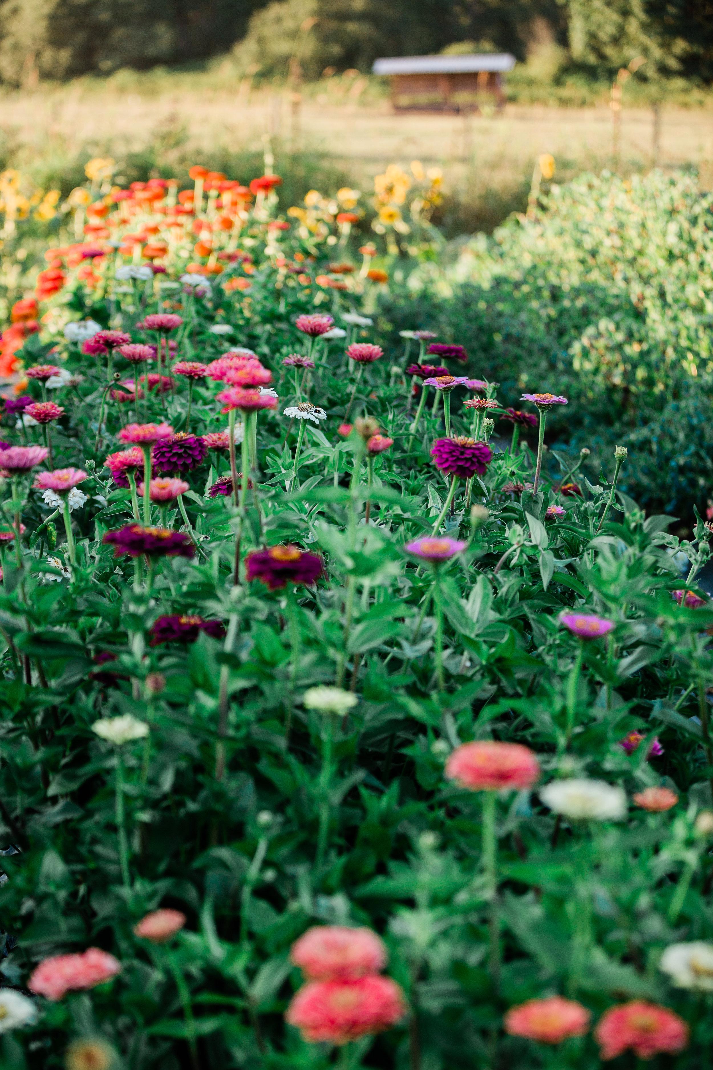 FlowerFarmerGirls-79.jpg