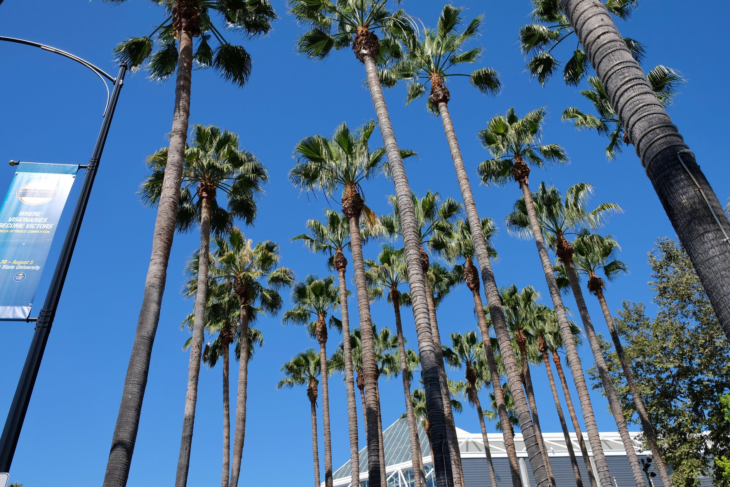 palm trees tickling clouds.jpg