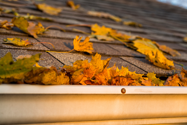 Gutters and Overall Site Drainage