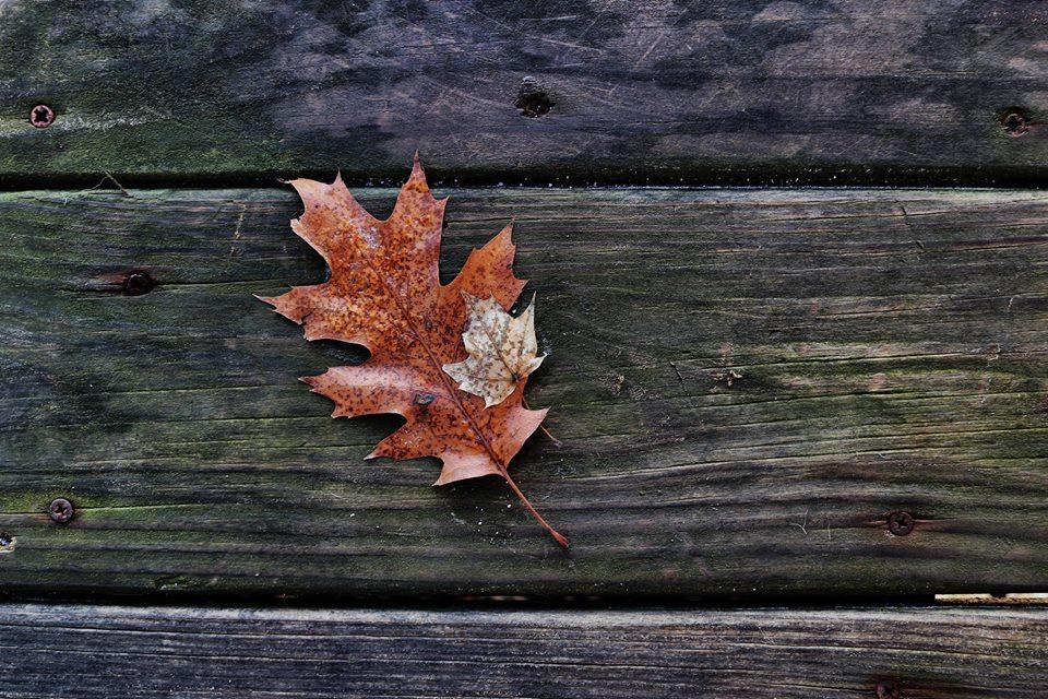 suella-leaf.jpg
