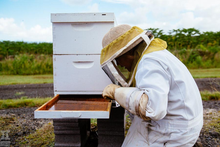 Beekeeping-in-Hawaii-20.jpg