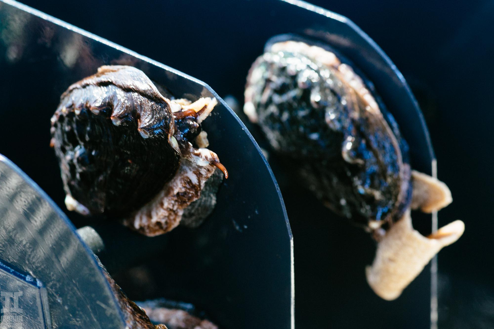 Abalone-6.jpg