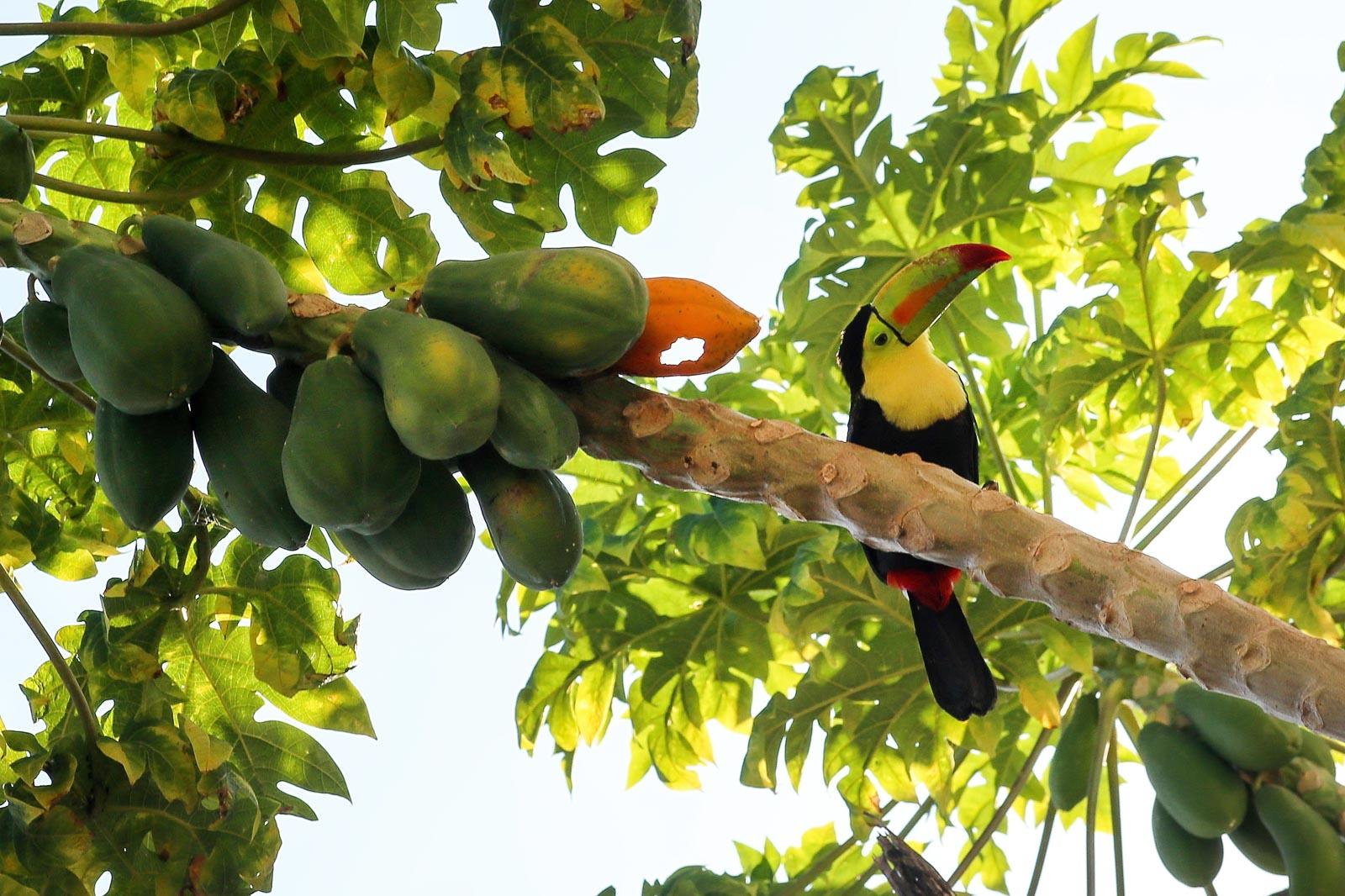 Pratt_Belize-Farm_10.jpg