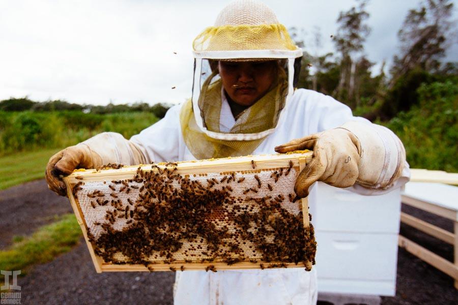 UH Hilo Beekeeping