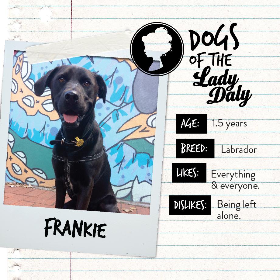 LD_Dogs_Frankie.jpg